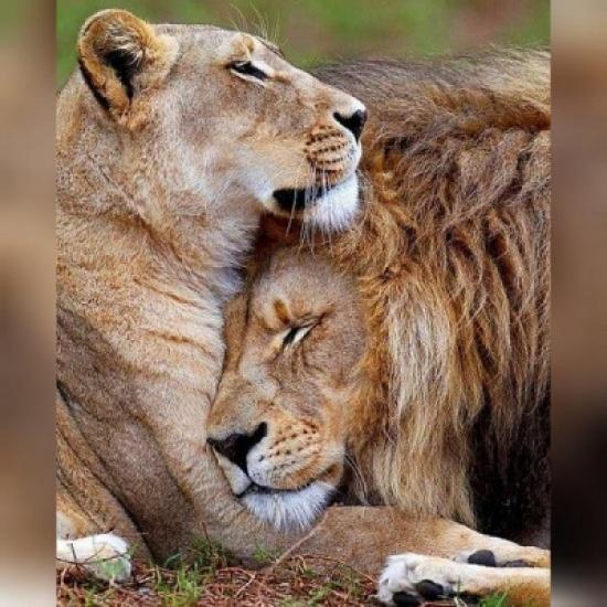 بالصور صور حب رومنسي , صور رومانسية للحيوانات 4009 1