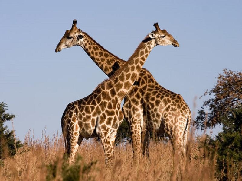 بالصور صور حب رومنسي , صور رومانسية للحيوانات 4009 10