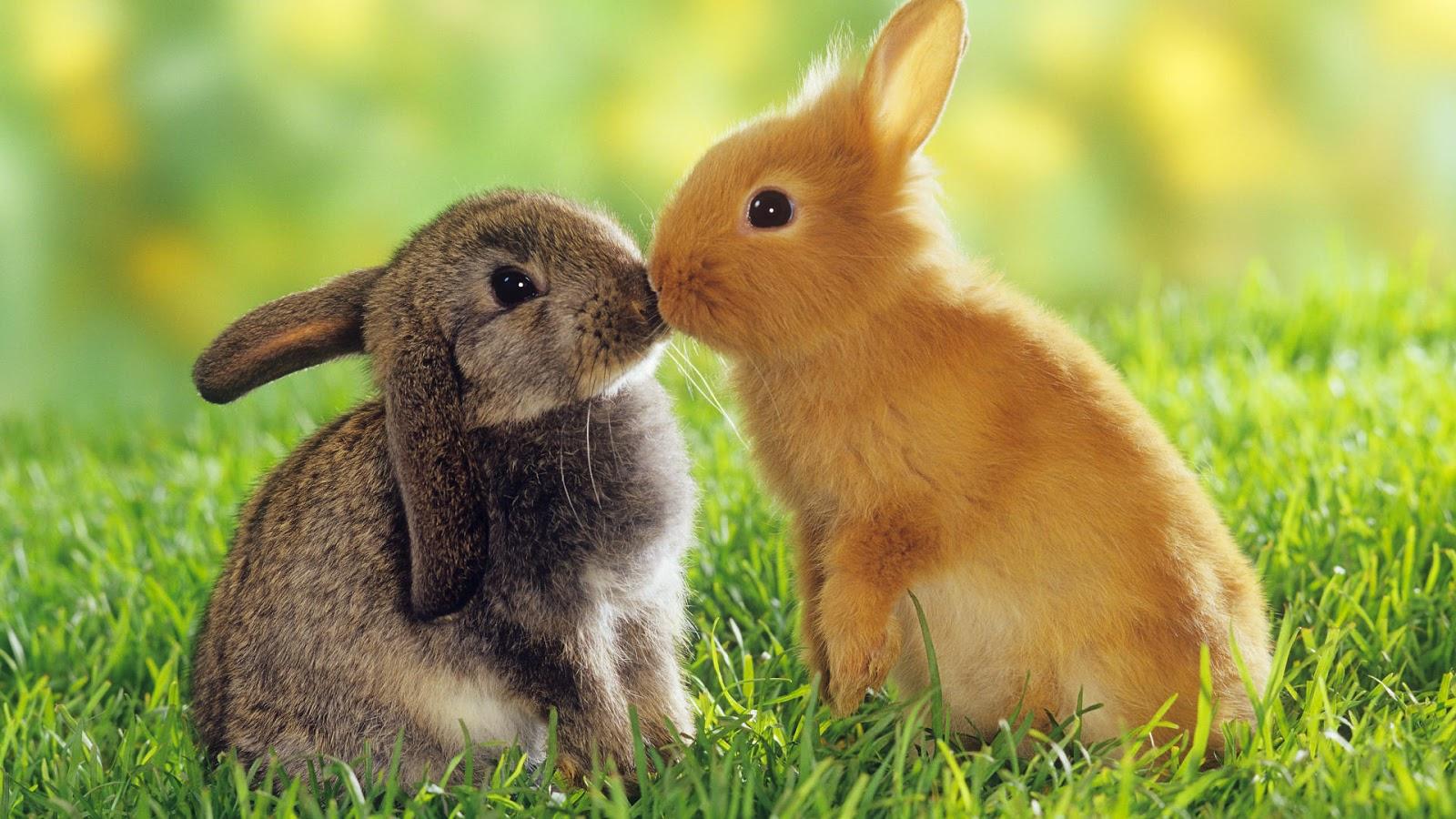 بالصور صور حب رومنسي , صور رومانسية للحيوانات 4009 11
