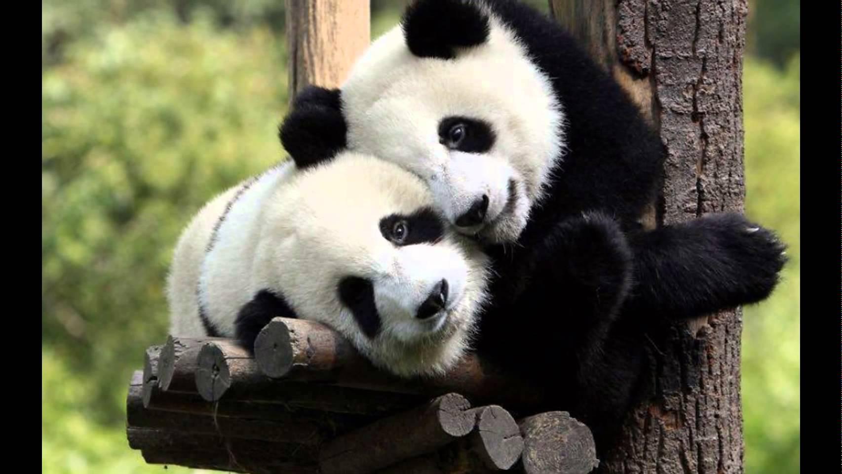 بالصور صور حب رومنسي , صور رومانسية للحيوانات 4009 3