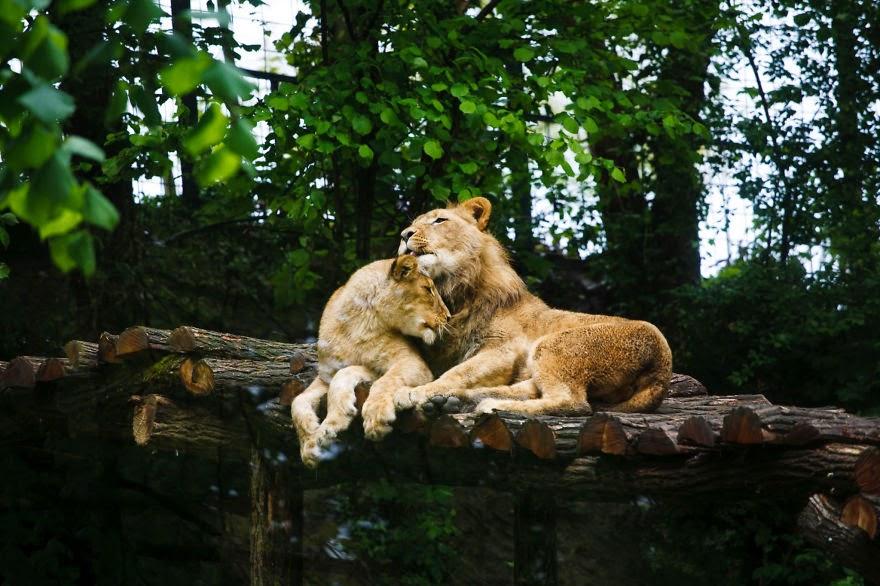 بالصور صور حب رومنسي , صور رومانسية للحيوانات 4009 4