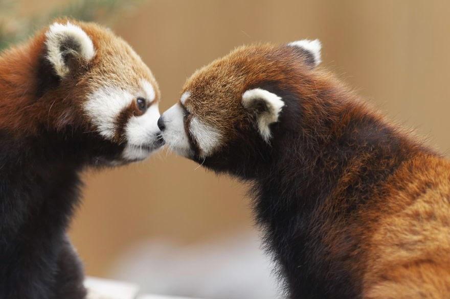 بالصور صور حب رومنسي , صور رومانسية للحيوانات 4009 6
