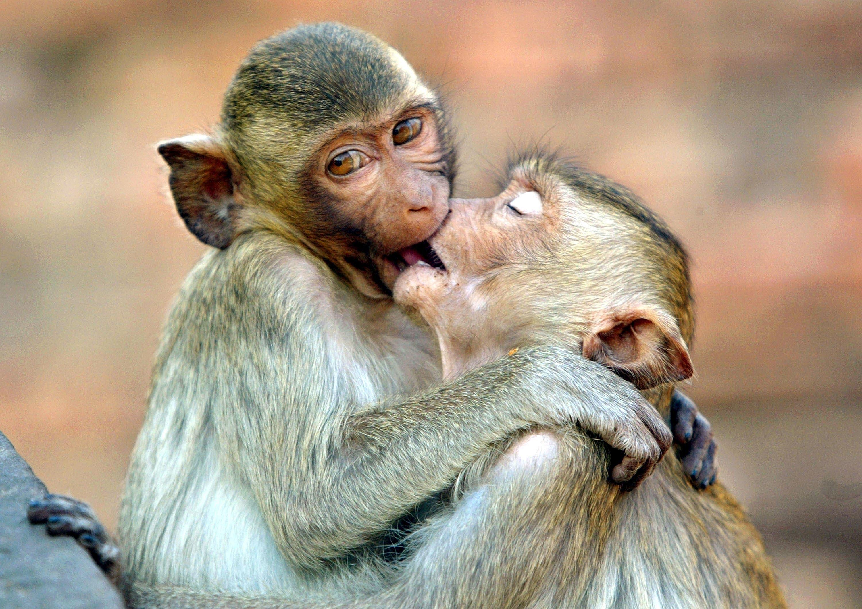 بالصور صور حب رومنسي , صور رومانسية للحيوانات 4009
