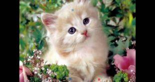 صوره صور قطط جميلة , اجمل قطط في العالم