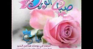 صوره صباح الورد للورد , اجمل الورود لصباح جميل