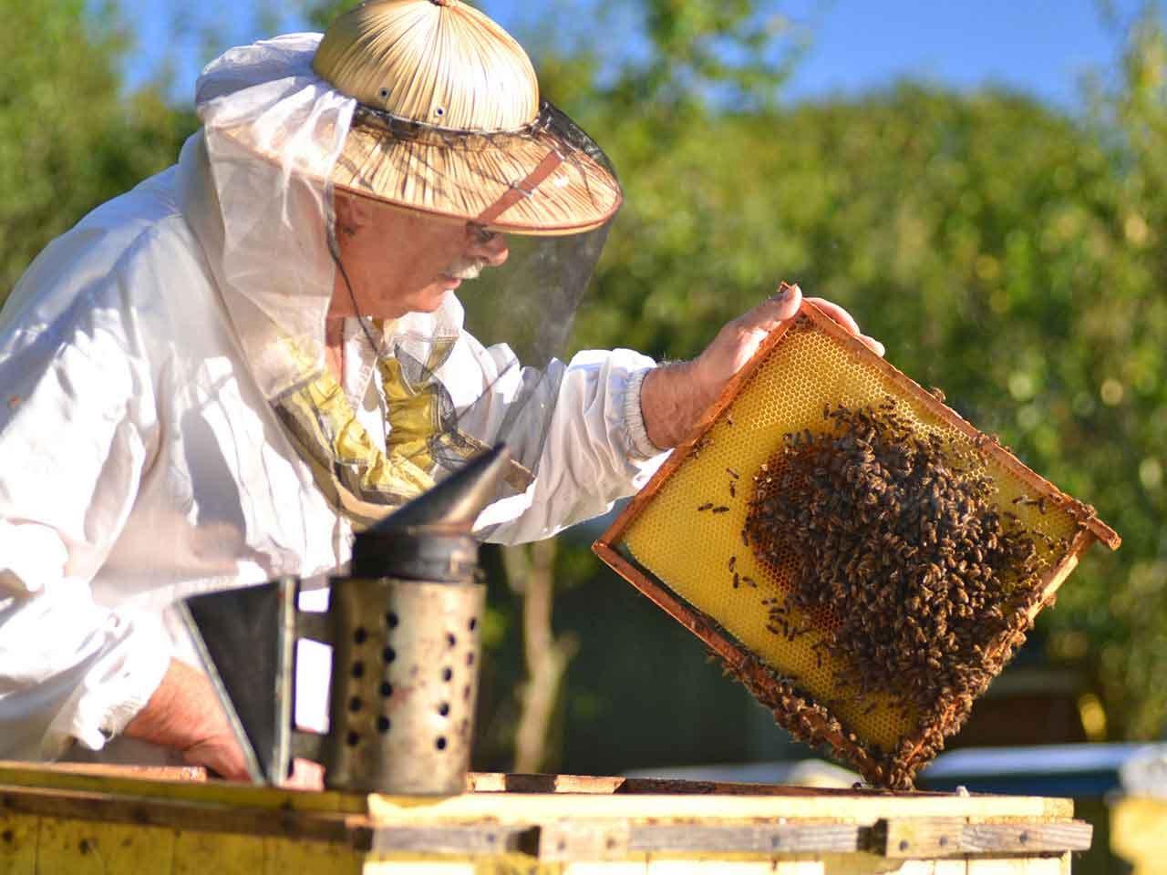 صور تربية النحل , اساسيات وطرق تربية النحل