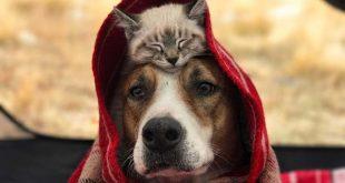 صورة قطط وكلاب , صور حيوانات ( قطط وكلاب)