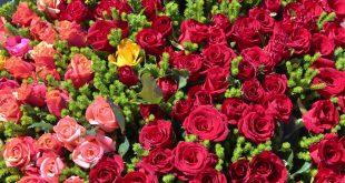 بالصور صور ورد رومانسي , اروع ورود الحب 1612 12 310x165