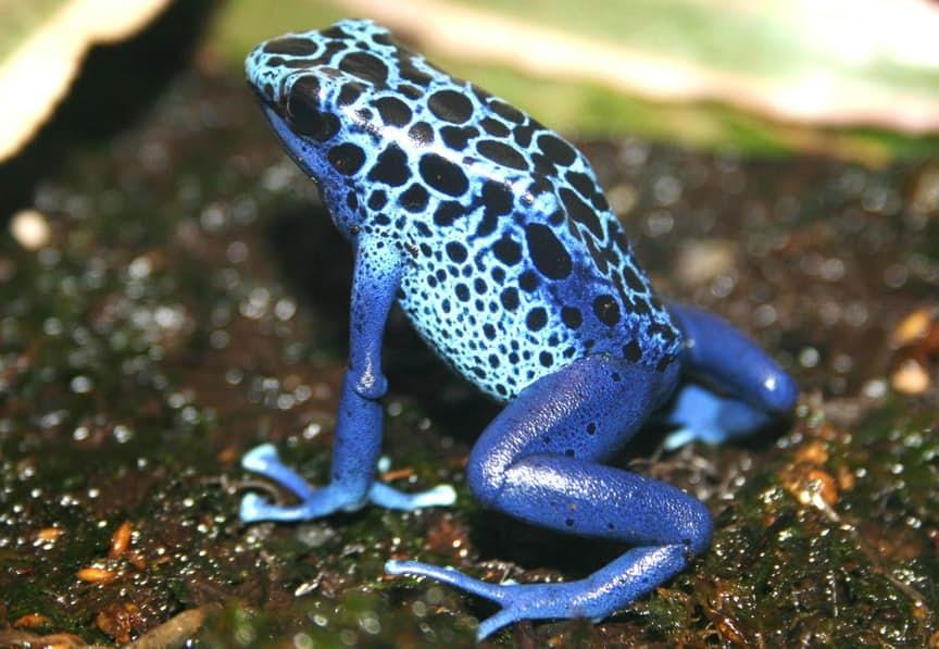 بالصور اجمل حيوان في العالم , ما هو اجمل حيوان في العالم سبحان الخالق 1830 10