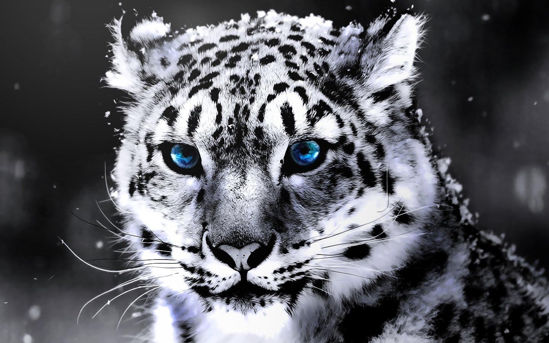 بالصور اجمل حيوان في العالم , ما هو اجمل حيوان في العالم سبحان الخالق 1830 14