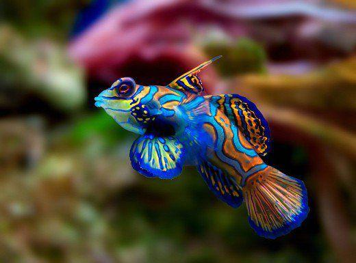 بالصور اجمل حيوان في العالم , ما هو اجمل حيوان في العالم سبحان الخالق 1830 3