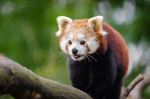 بالصور اجمل حيوان في العالم , ما هو اجمل حيوان في العالم سبحان الخالق 1830 5