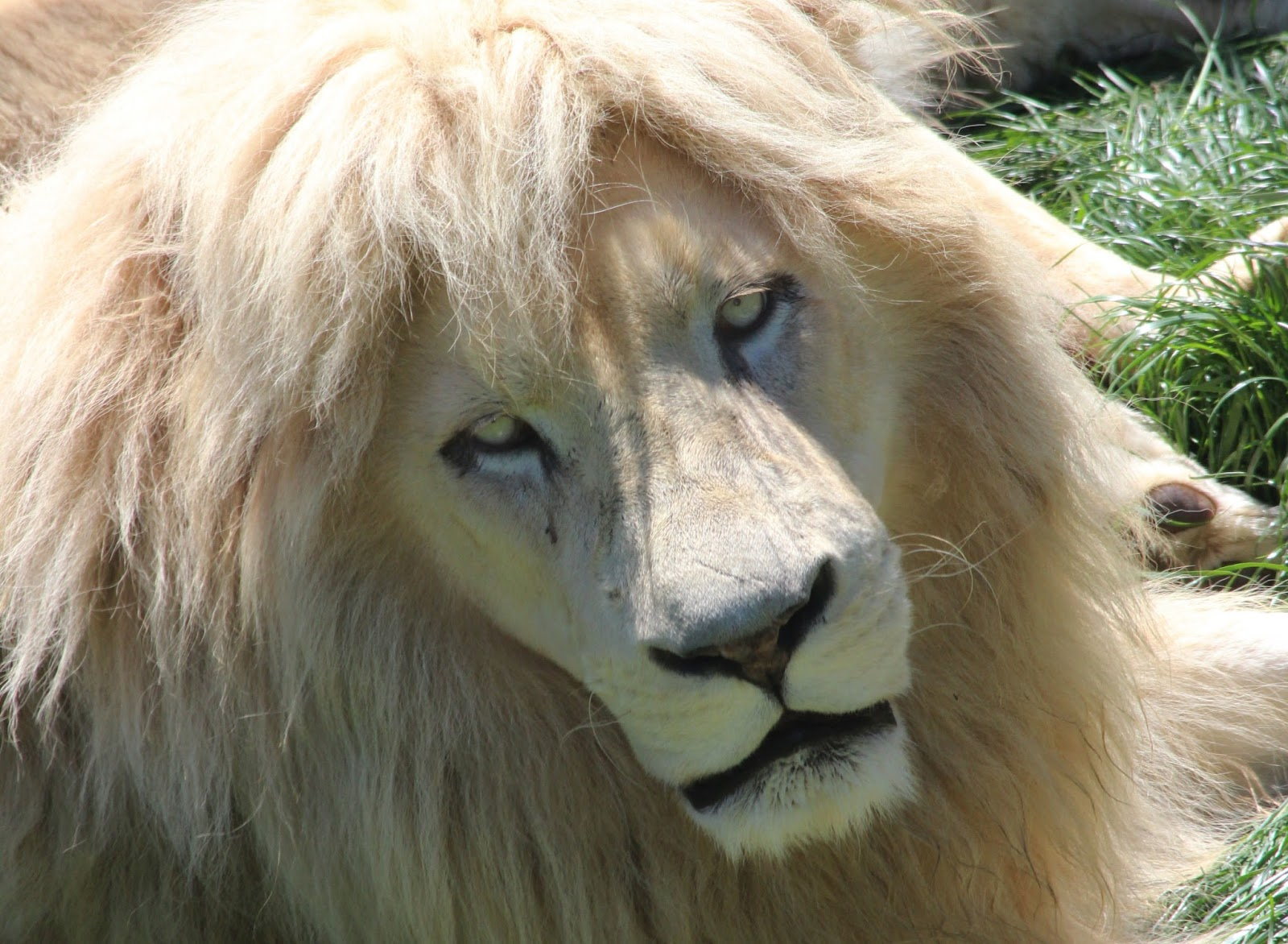 بالصور اجمل حيوان في العالم , ما هو اجمل حيوان في العالم سبحان الخالق 1830 6