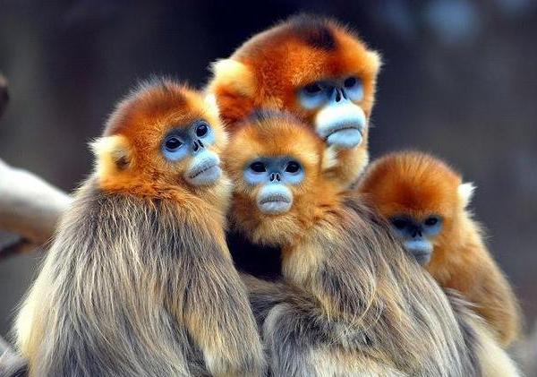 بالصور اجمل حيوان في العالم , ما هو اجمل حيوان في العالم سبحان الخالق 1830 7
