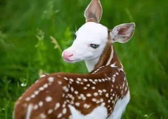 بالصور اجمل حيوان في العالم , ما هو اجمل حيوان في العالم سبحان الخالق 1830 9