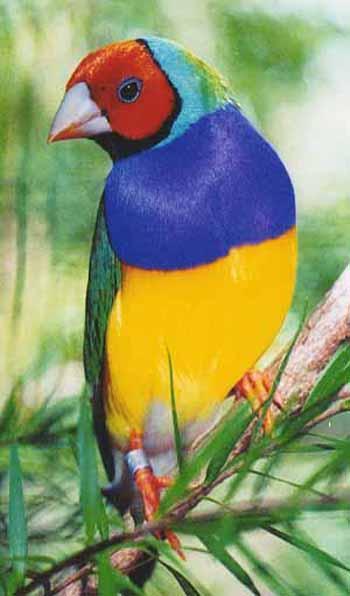 صور اجمل حيوان في العالم , ما هو اجمل حيوان في العالم سبحان الخالق