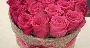 بالصور صور ورد جميل , اجمل انواع الورد 1971 12 310x165