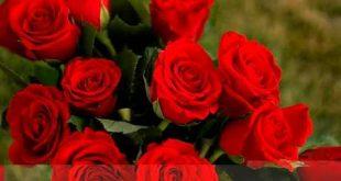 صوره اجمل ورود العالم , اشكال الورود الجميلة فى الكون