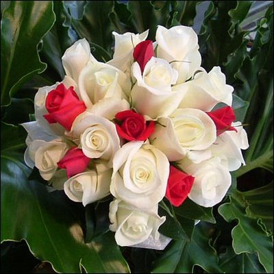 بالصور اجمل ورود العالم , اشكال الورود الجميلة فى الكون 2686 6