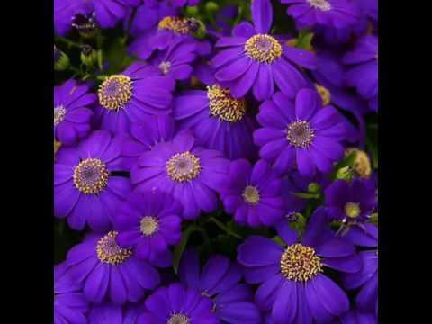 بالصور اجمل ورود العالم , اشكال الورود الجميلة فى الكون 2686 9