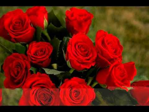 صور اجمل ورود العالم , اشكال الورود الجميلة فى الكون