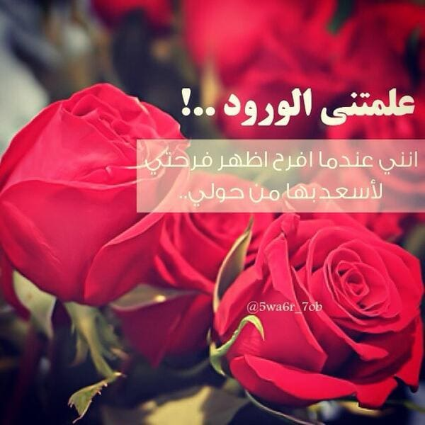 بالصور عبارات عن الورد , اجمل ما قيل عن الورود 2779 2