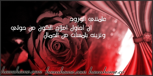 بالصور عبارات عن الورد , اجمل ما قيل عن الورود 2779 5