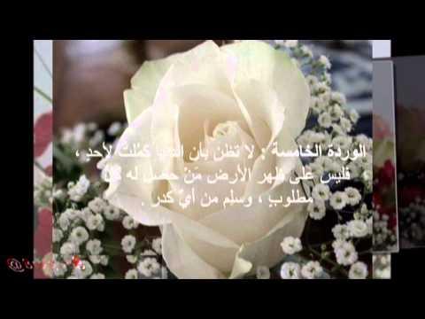 بالصور عبارات عن الورد , اجمل ما قيل عن الورود 2779 7