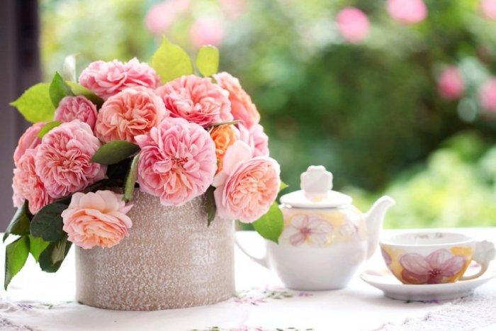 صوره شعر عن الورد , كلمات فى وصف الورود