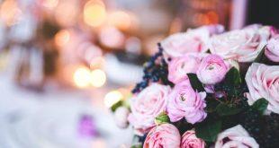 صورة شعر عن الورد , كلمات فى وصف الورود