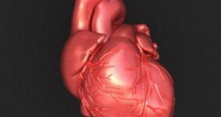 صور صور قلب الانسان , تصوير من داخل جسم الانسان