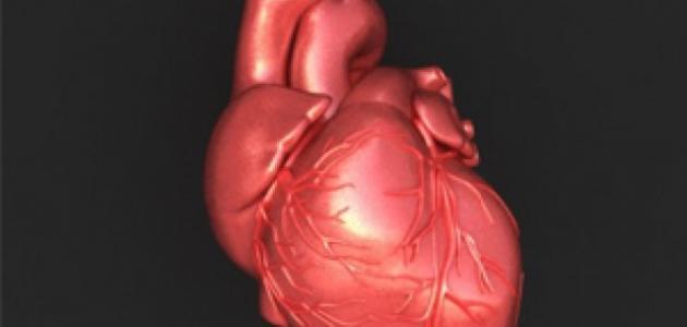 صورة صور قلب الانسان , تصوير من داخل جسم الانسان