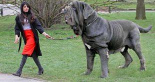صورة اشرس انواع الكلاب , كلاب خطر التعامل معها