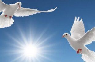 صوره صور عن السلام , اجمل ما يعبر عن السلام