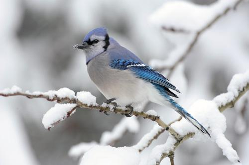 بالصور صور عصافير , صور رائع لعصافير مختلفة 3306 1