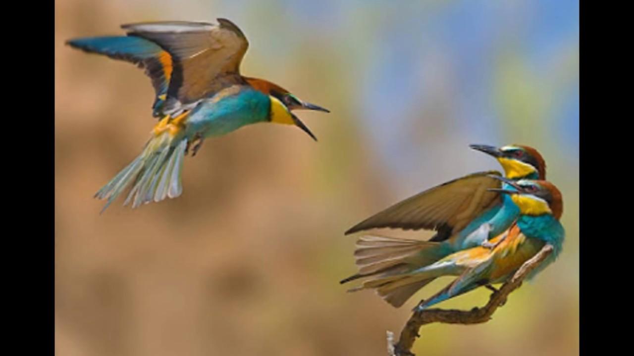 بالصور صور عصافير , صور رائع لعصافير مختلفة 3306 11