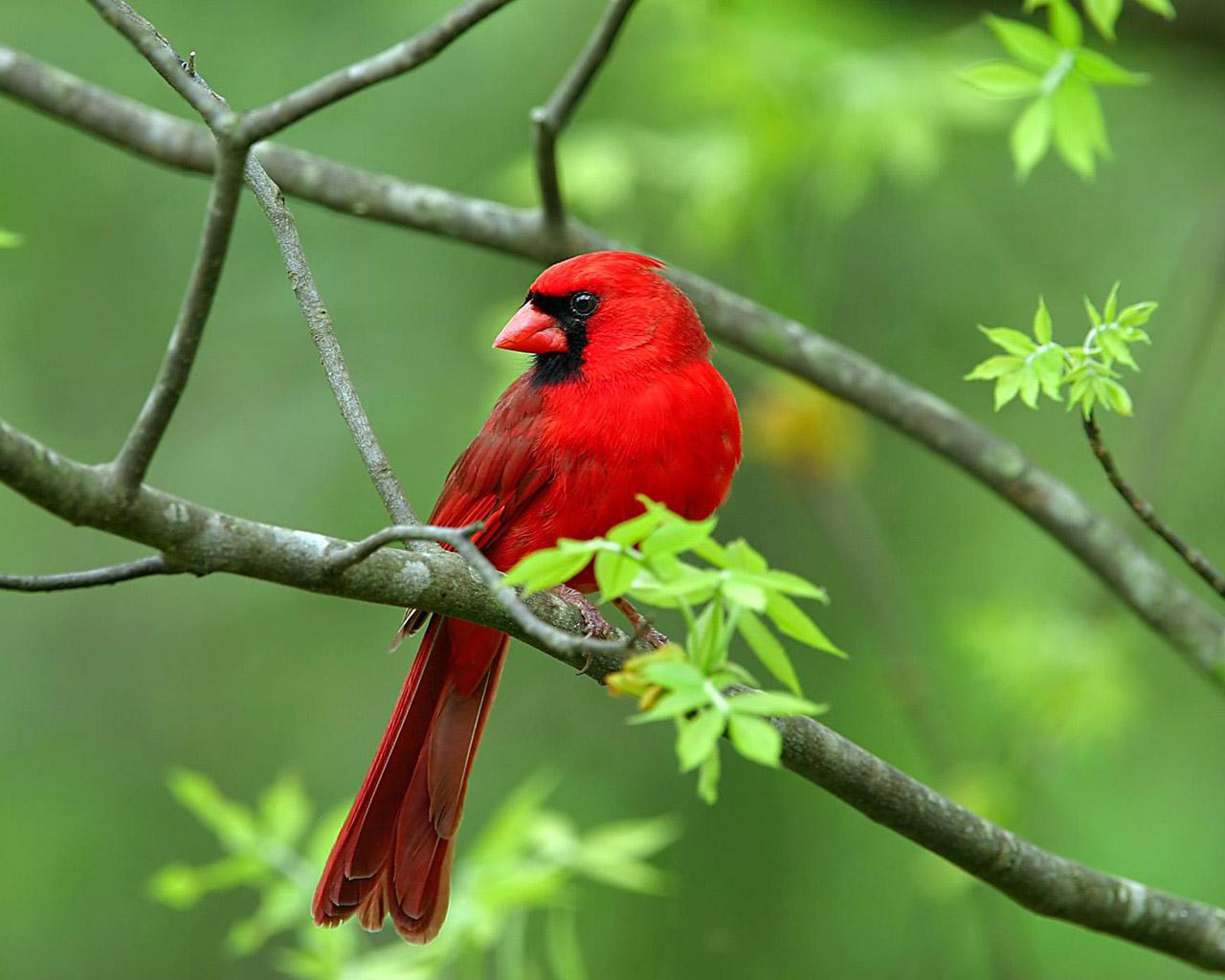 بالصور صور عصافير , صور رائع لعصافير مختلفة 3306 12