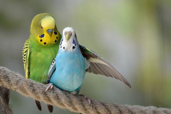 بالصور صور عصافير , صور رائع لعصافير مختلفة 3306 2