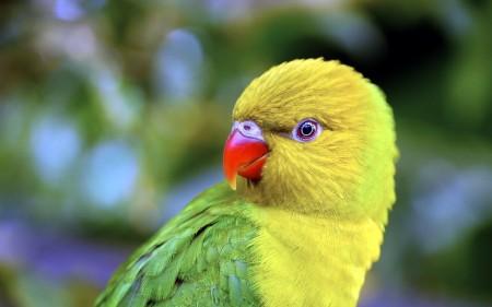 بالصور صور عصافير , صور رائع لعصافير مختلفة 3306 3