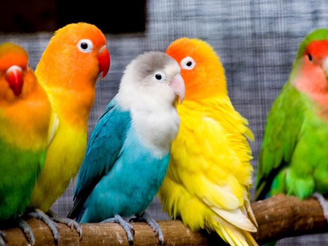 بالصور صور عصافير , صور رائع لعصافير مختلفة 3306 4