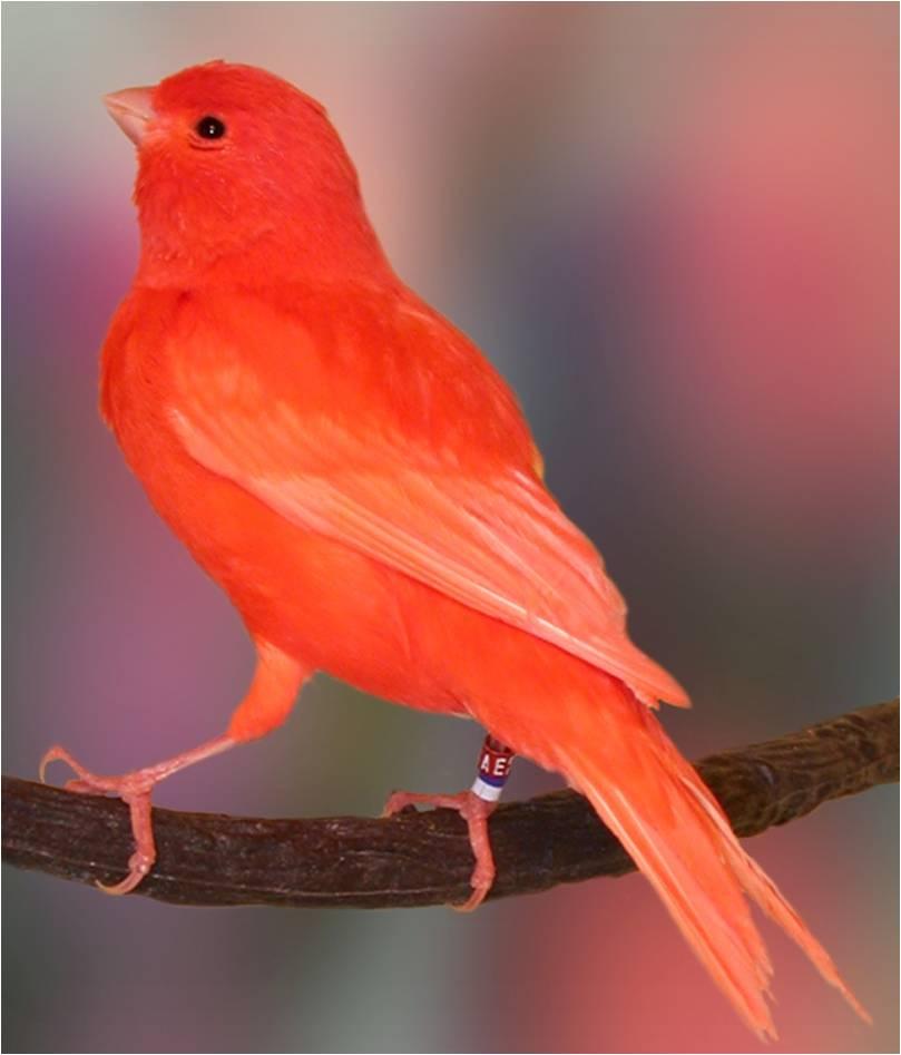 بالصور صور عصافير , صور رائع لعصافير مختلفة 3306 5