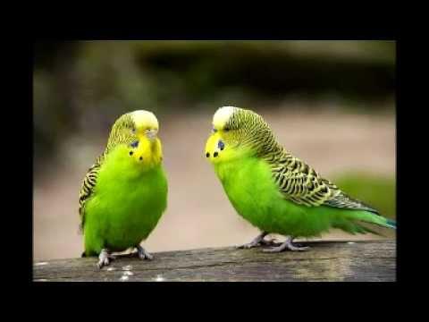 بالصور صور عصافير , صور رائع لعصافير مختلفة 3306 6