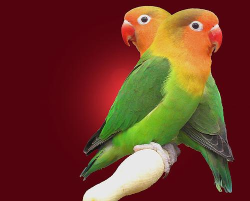 بالصور صور عصافير , صور رائع لعصافير مختلفة 3306 7