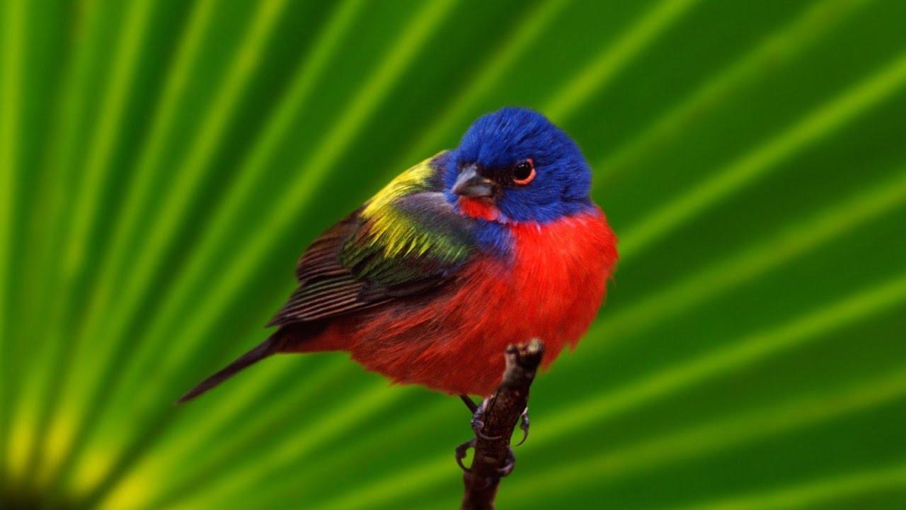 بالصور صور عصافير , صور رائع لعصافير مختلفة 3306 9