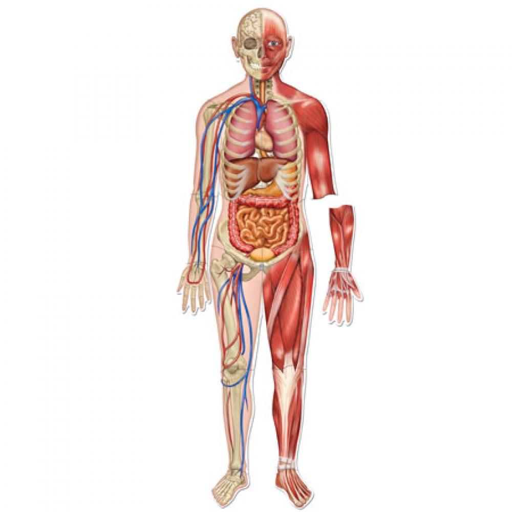بالصور صور جسم الانسان , صور مختلفة لجسم الانسان 3313 2