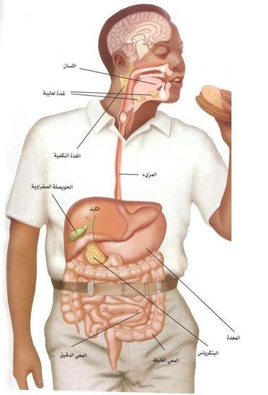 بالصور صور جسم الانسان , صور مختلفة لجسم الانسان 3313 6