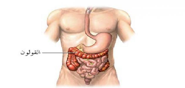 بالصور صور جسم الانسان , صور مختلفة لجسم الانسان 3313 9