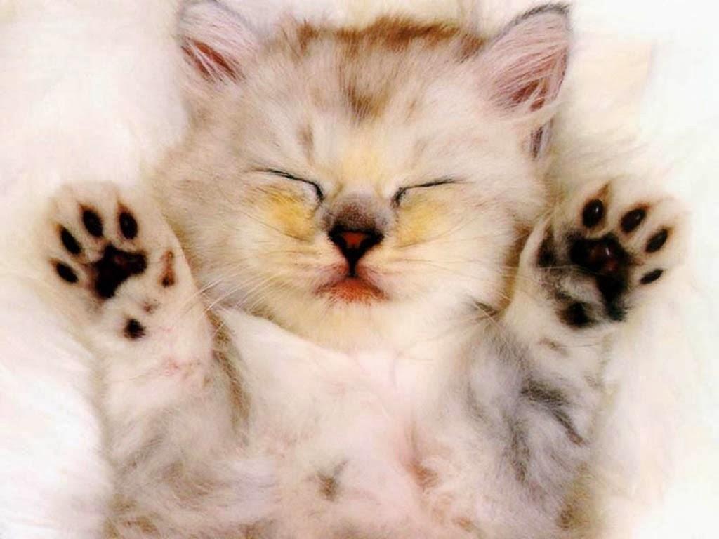 بالصور اجمل صور قطط , اذا كنت من محبي القطط سينال هذا الموضوع اعجابك حتما ! 3348 1
