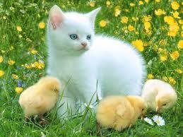 بالصور اجمل صور قطط , اذا كنت من محبي القطط سينال هذا الموضوع اعجابك حتما ! 3348 10