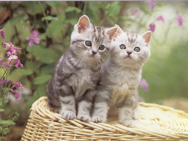 بالصور اجمل صور قطط , اذا كنت من محبي القطط سينال هذا الموضوع اعجابك حتما ! 3348 11